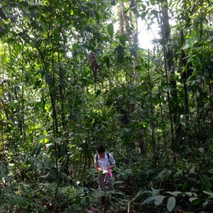My mentor, Cleo Chou, taking measurements in the rainforest last summer.